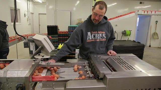 Organic egg farm encourages animal welfare