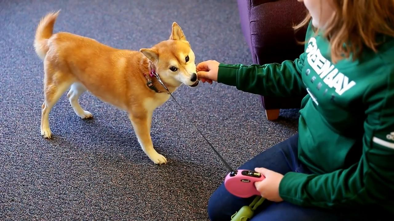 Students at UW-Green Bay in need of extra support may go through the process to bring an emotional support animal on campus with them to live in their dorm.