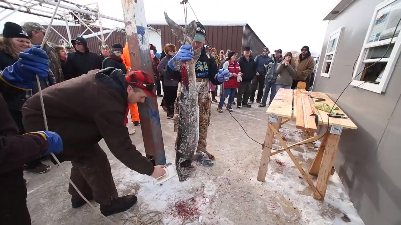 Numerous activities on shore kept people busy during Sturgeon Spectacular while thousands were out on the ice trying to spear a sturgeon fish.