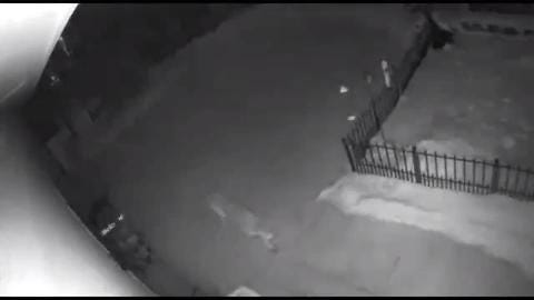 Video footage of a large cat recorded by landowners in Washington County Feb. 7 has been verified by Department of Natural Resources biologists as a cougar.
