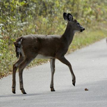 With the deer population booming in Waukesha County, local municipalities are looking for ways to bring the deer numbers down.