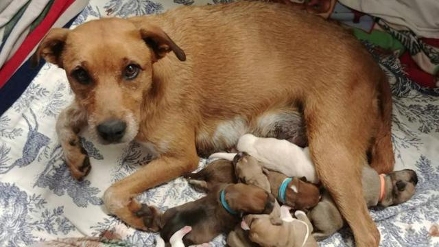 Wisconsin volunteers raced down to Alabama to save a pregnant dog from being euthanized. On the way back, she gave birth in a hotel room.