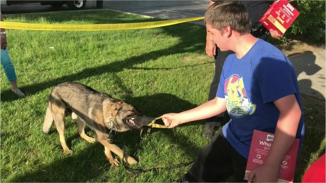Green Bay Police's Bark 'n Blue Foundation had a fundraiser June 7, 2018. Meet some of the department's police dogs.