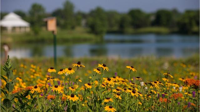 Dorothy Messner, of Fond du Lac, sought approval from the City of Fond du Lac and started a native wildflower prairie near her home in 2015. Years later, her vision has come to life and greets those who take a small walking path near Camelot Drive and Knight's Way in southern Fond du Lac.