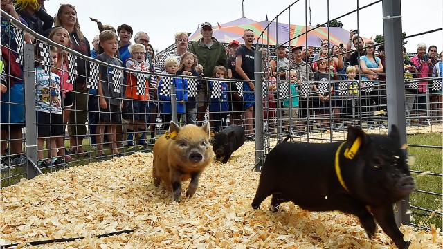 The Door County Fair runs through Aug. 5 and includes daily races featuring ducks, pigs and goats.