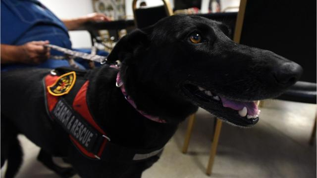 Liberty Township Fire Department has a new member: Zoom'n Zella. The 5-year-old Labrador-German shepherd mix is a certified search and rescue dog.