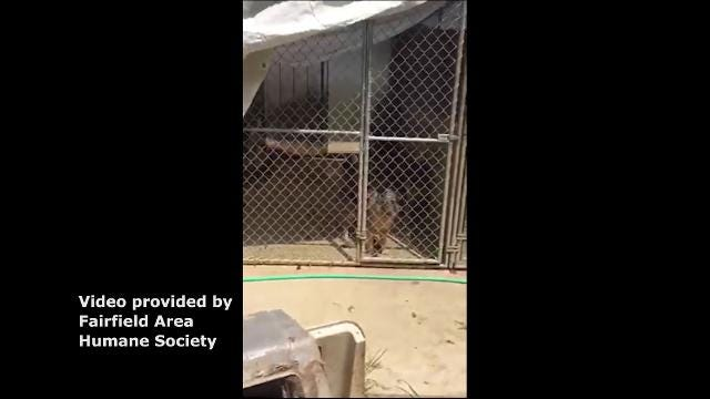 RAW VIDEO: See video of conditions shelties were living in