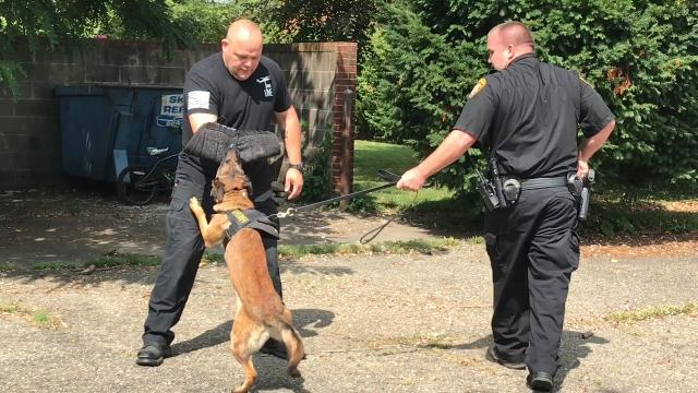 Deputy Steve Mox and canine Chili of the Coshocton County Sheriff's Office demonstrate how to take catch a suspect with help from Det. Dave Stone and how to search vehicles for illicit drugs.