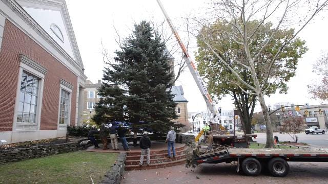 City employees spent Wednesday morning harvesting, transporting and installing a 30 foot tall blue spruce in downtown Lancaster. The annual tree lighting ceremony will be at 6 p.m. on Dec. 2.