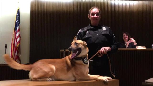 Mansfield City Council honored retiring K9 officer Sam on Tuesday, who came to the department in May 2014 after he was imported from Holland.