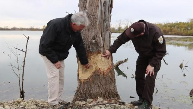 U.S. Rep. Bob Latta, R-Bowling Green, toured the Ottawa National Wildlife Refuge on Friday to see ongoing work made possible through the Great Lakes Restoration Initiative in action.