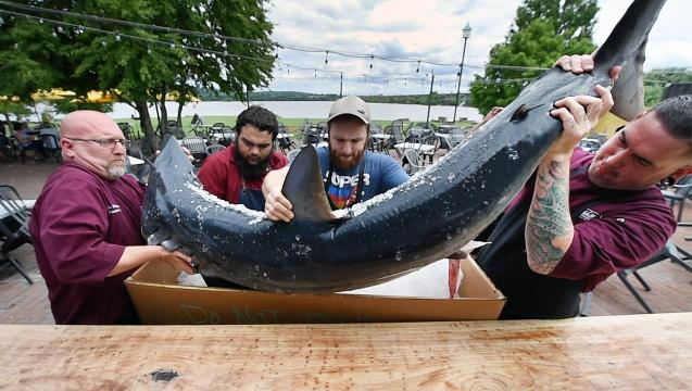 162 pound shark arrives in Wrightsville