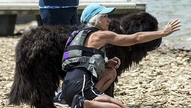 Watch: Getting in the water with a Newfoundland