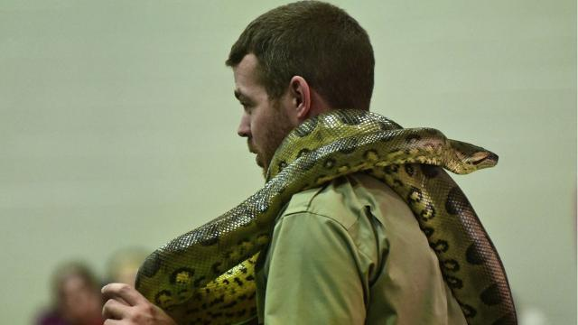 Reptile World visits Fayetteville Elementary students