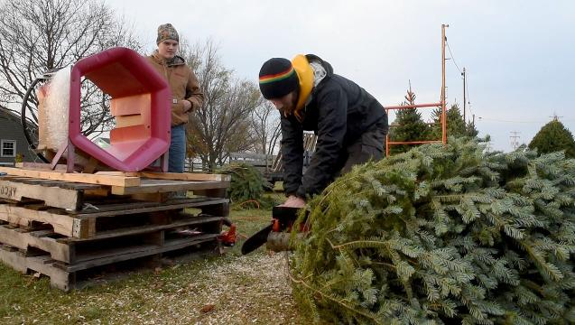 Christmas tree sales help fund the battle against cancer
