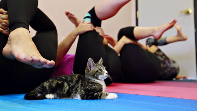 VIDEO: Kitten Yoga at SPCA