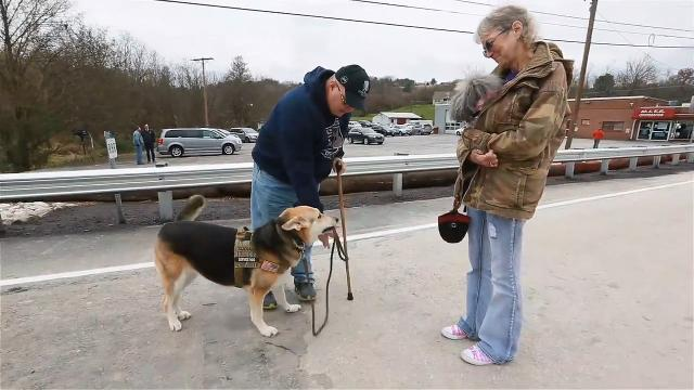 VIDEO: Dog T.A.G.S. works to place service dogs with veterans