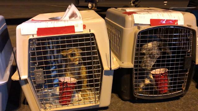 El Paso Animal Services put shelter pets on a plane to Tulsa, Okla., as part of the department's first-ever large-scale transport Friday.