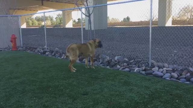 """The city of El Paso's Animal Services Department reminds the public that big doggies need homes, too, in this """"I Like Big Mutts"""" video."""