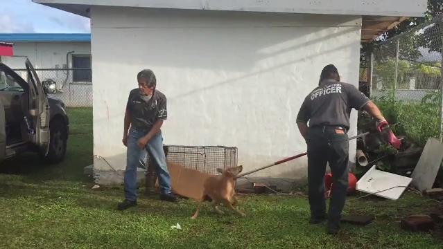 Step up efforts to address stray dog problem 1022