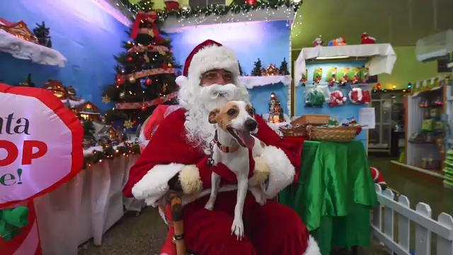 Pet store Feathers 'N Fins welcomes pet owners for free pictures with Santa Claus on Dec. 16, 2017.