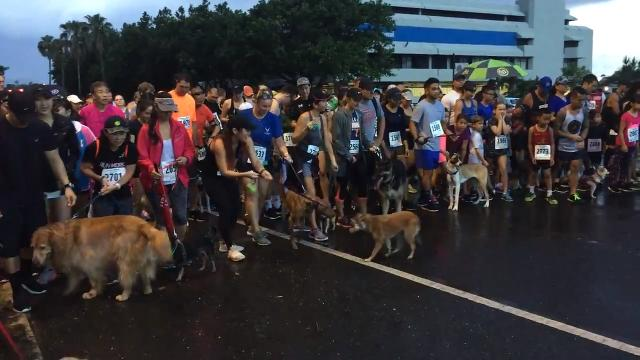 """Owners bring out their dog and their running shoes for Guam Animals In Need's second annual 5K and 2K Doggy Dash """"2 Fast 2 Furriest"""" in Hagåtña, Oct. 14, 2018."""