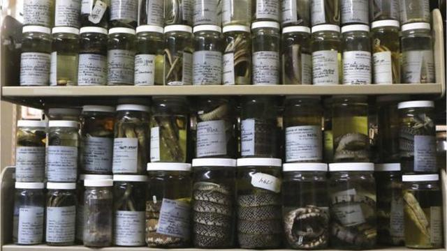 ULM Natural History collections to be moved to universities across the South