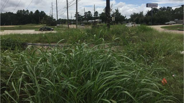 Get 'er Done: Grass at Idema/Linwood