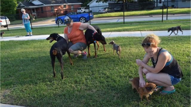 Shana Stephens who owns two doberman pinschers, Jackson and Khaleesi, says she and her dogs are currently fixtures at the new dog park in Alexandria.