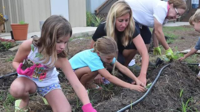 The Sharbono family has been volunteering in the Good Food Project community garden. The four children have been learning about giving back to the community as well as learning about gardening and how vegetables grow.
