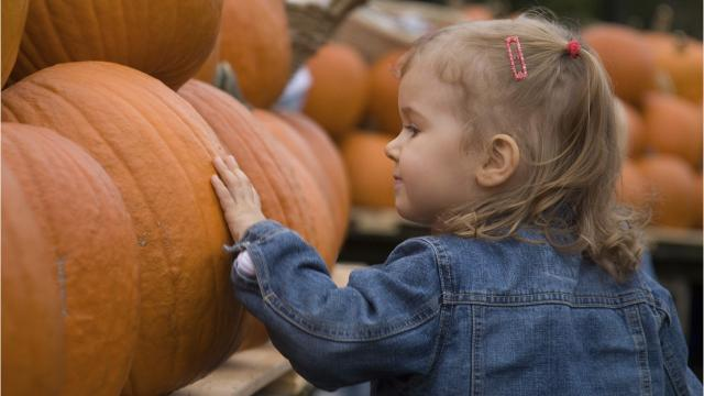 Check out these three fall-themed events that are great for the whole family!