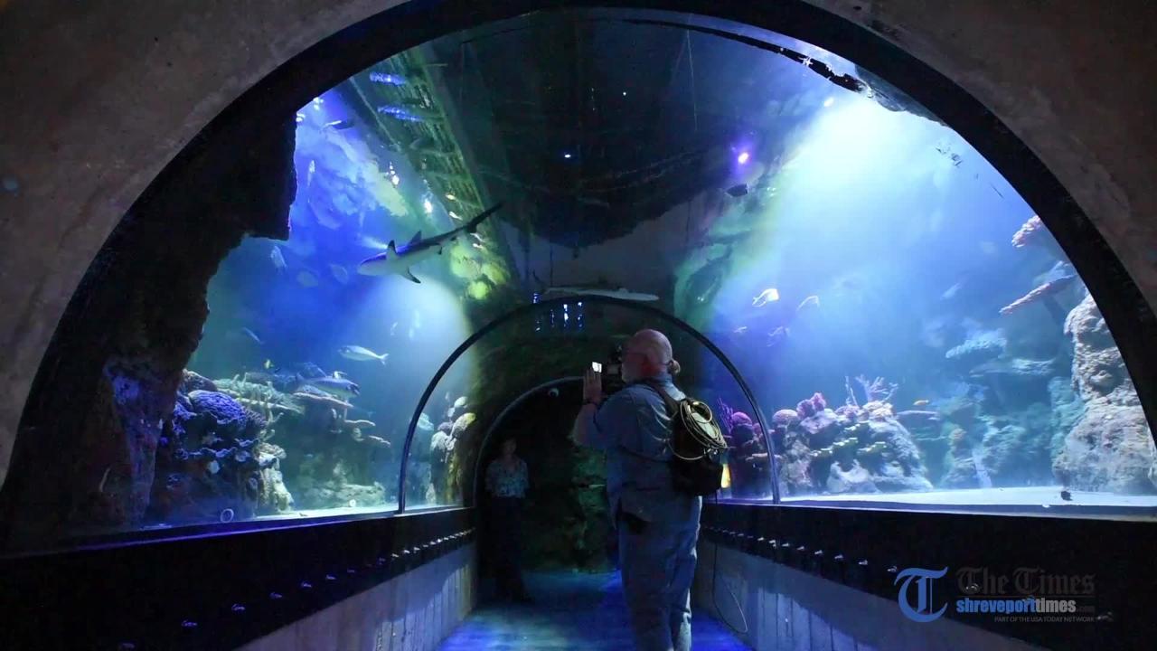 shreveport aquarium opening nov 1