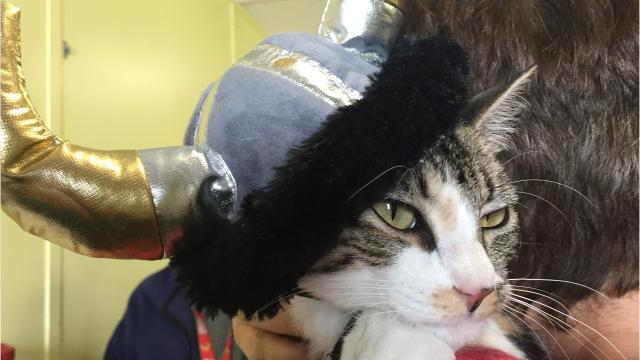 We tried our hand at putting pets in Halloween costumes. These adoptable pets at Lafayette Animal Care Center were good sports, but they were more interested in kisses and belly rubs.