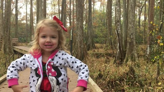 What to do at Palmetto Island State Park