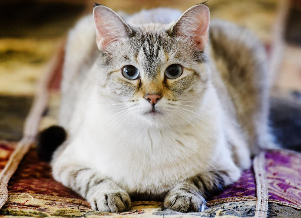 Shreveport cat acts like a dog!