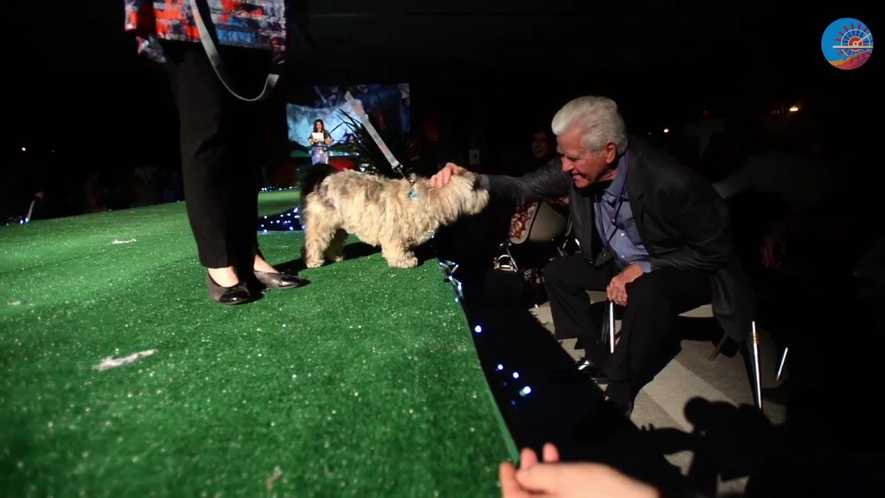 The 9th annual Best In Sheaux live runway dog show fundraiser for Robinson's Rescue Low Cost Spay/Neuter.