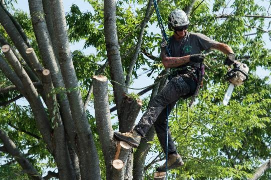 WATCH: Time lapse video of Main Street Tree Removal