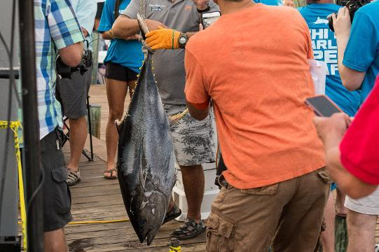 WATCH: Scenes from day two of the White Marlin Open