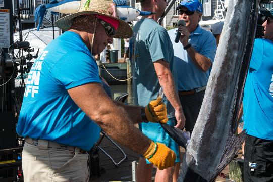 After a busy day at Harbour Island Marina the winning marlin was brought in by the crew of the Wire Nut.