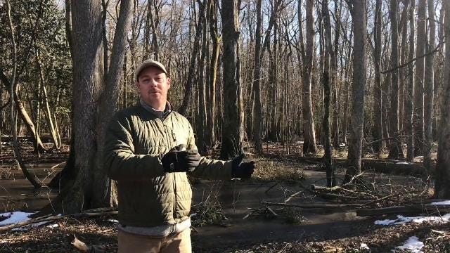 The swamplands outside of Berlin might not look like much, but they are the site of one the largest restoration projects in Maryland's history.