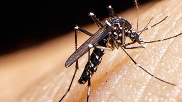 Mosquitoes are seemingly all around right now on Delmarva.