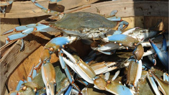 WATCH: What's behind the price increase for Maryland crabs?