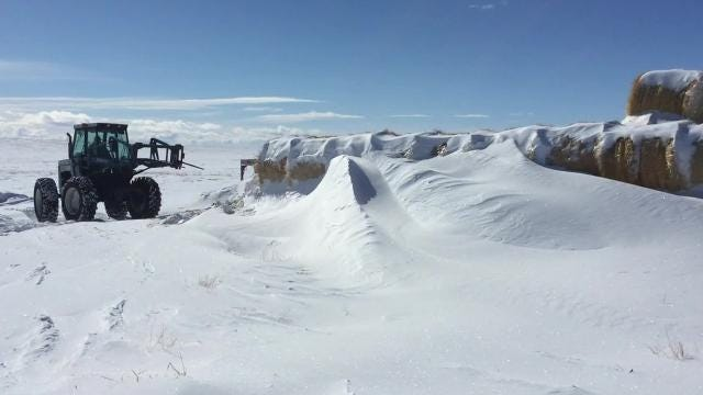 This Is Such Brutal Winter Cant We >> This Is A Crisis Montana Cattle Struggling In Brutal Winter