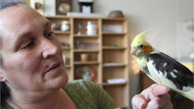 Cockatiel helps Great Falls resident find relief from PTSD