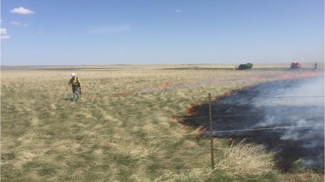 Prescribed fire is used at Benton Lake National Wildlife Refuge to rejuvenate grassland.