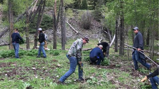 On your next outdoor adventure, spend five to 15 minutes pulling noxious weeds. The effort can help make a difference in Montana's wild places.