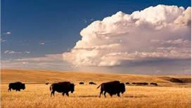 Sitting in Northeastern Montana, the Ft. Peck Indian Reservation is rich in natural beauty