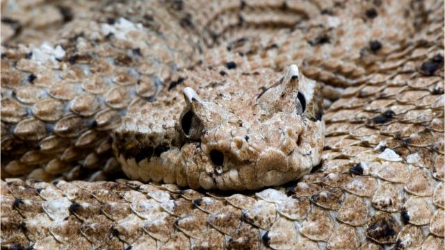 Rattlesnake bites kill approximately five people a year.
