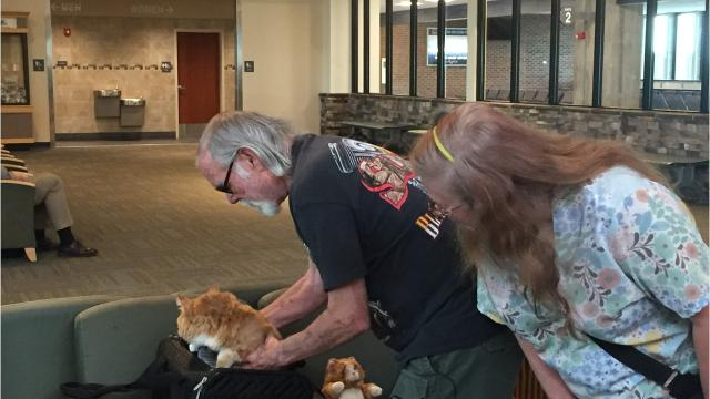 Great Falls cat returns to Montana after turning up 900 miles away in Reno, Nevada.