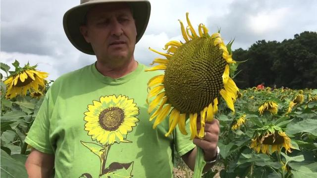 Frazier family's Hope Field offers help to those battling cancer and depression.
